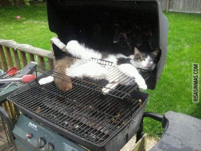 La carne y tal...